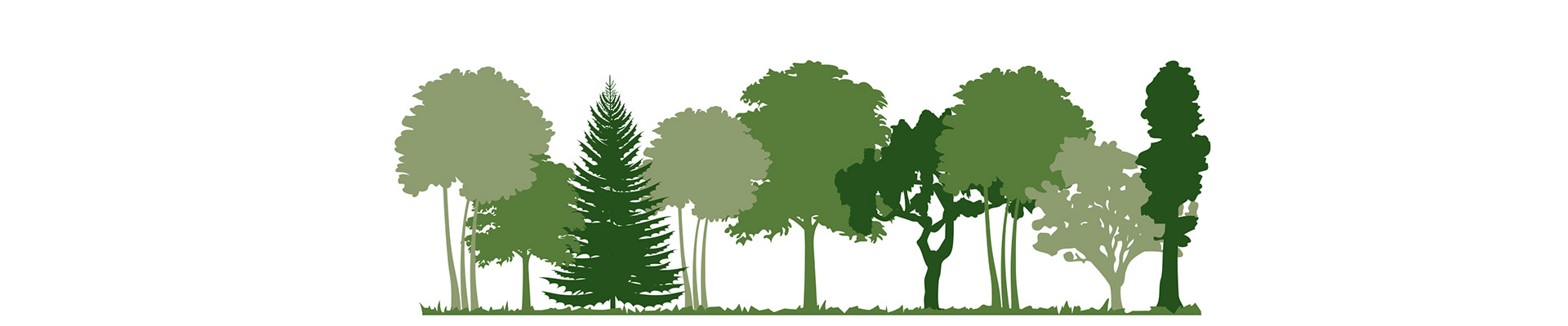be-natural-foresta
